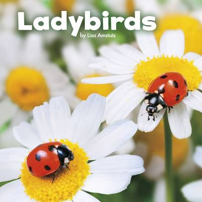 Amstutz, Lisa J. - Ladybirds (Little Pebble: Little Creatures) - 9781474725057 - V9781474725057