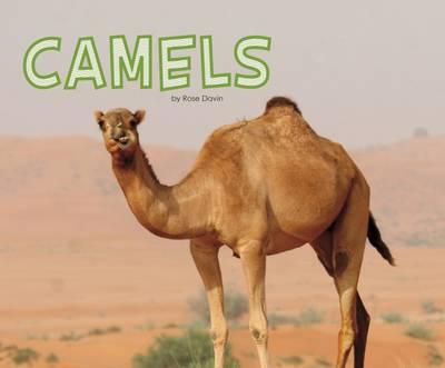 Davin, Rose - Camels (Pebble Plus: Meet Desert Animals) - 9781474736565 - V9781474736565