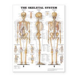 Anatomical Chart Company - The Skeletal System Giant Chart - 9781587799822 - V9781587799822
