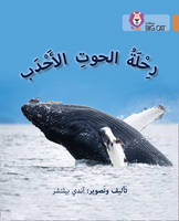 Belcher, Andy - Journey of Humpback Whales: Level 12 - 9780008156640 - V9780008156640