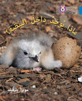 Collins UK - What's in the Egg?: (Level 4) (Collins Big Cat Arabic) - 9780008185565 - V9780008185565