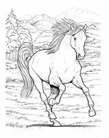 John Green - Wonderful World of Horses Coloring Book (Dover Coloring Book) - 9780486444659 - V9780486444659