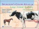 McCracken, Thomas O.; Kainer, Robert A.; Spurgeon, Thomas Leslie; Brooks, Gregory - Spurgeon's Color Atlas of Large Animal Anatomy - 9780683306736 - V9780683306736