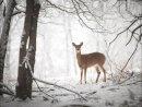 Galison - Doe in the Forest Large Embellished Holiday Notecards - 9780735344167 - V9780735344167