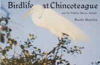 Meanley, Brooke - Bird Life at Chincoteague and the Virginia Barrier Islands - 9780870332579 - V9780870332579