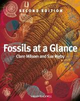 Milsom, Clare, Rigby, Sue - Fossils at a Glance - 9781405193368 - V9781405193368