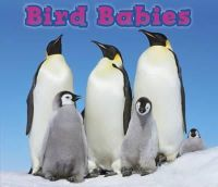 Veitch, Catherine - BIRD BABIES - 9781406259308 - V9781406259308