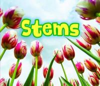 Throp, Claire - All About Stems (Acorn: All About Plants) - 9781406284416 - V9781406284416