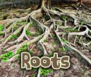 Throp, Claire - All About Roots (Acorn: All About Plants) - 9781406284454 - V9781406284454