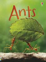 Bowman, Lucy - Ants - 9781409581604 - KRS0029340