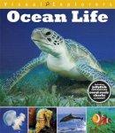 Calver, Paul, Reynolds, Toby - Visual Explorers: Ocean Life - 9781445137438 - V9781445137438