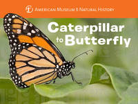 Stewart, Melissa, American Museum of Natural History - Caterpillar to Butterfly - 9781454914068 - V9781454914068