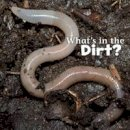 Rustad, Martha E. H. - What's in the Soil? (Little Pebble: What's in There?) - 9781474706032 - V9781474706032