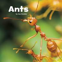 Amstutz, Lisa J. - Ants (Little Pebble: Little Creatures) - 9781474725040 - V9781474725040