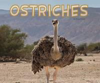 Davin, Rose - Ostriches (Pebble Plus: Meet Desert Animals) - 9781474736596 - V9781474736596