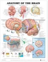 Anatomical Chart Company - Anatomy of the Brain Anatomical Chart - 9781587790898 - V9781587790898
