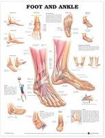 Anatomical Chart Company - Foot and Ankle Anatomical Chart - 9781587791376 - V9781587791376