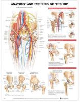 Anatomical Chart Company - Anatomy and Injuries of the Hip Anatomical Chart - 9781587793837 - V9781587793837