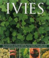 Key, Hazel - Ivies: An illustrated guide to varieties, cultivation and care, with step-by-step instructions and over 150 inspiring photographs - 9781780193687 - V9781780193687