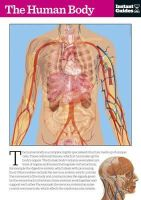Instant Guides - The Human Body - 9781780500133 - V9781780500133