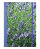 - Lavender Blue Hardback Notebook - 9781782492153 - V9781782492153