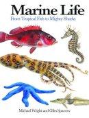 Wright, Michael, Sparrow, Giles - Marine Life: From Tropical Fish to Mighty Sharks (Mini Encylopedia) - 9781782744450 - V9781782744450