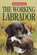 Hudson, David - The Working Labrador - 9781840372526 - V9781840372526