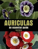 Dorey, Paul - Auriculas: An Essential Guide - 9781847972866 - V9781847972866
