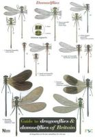 Brooks, Steve - Guide to the Dragonflies and Damselflies of Britain - 9781851538638 - V9781851538638