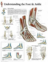Scientific Publishing - Understanding the Foot and Ankle - 9781930633728 - V9781930633728