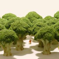 Tanaka, Tatsuya - Small Wonders - Life Portrait in Miniature - 9784865050776 - V9784865050776
